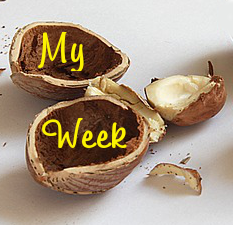 My Week in a Nut Shell ~ LifeOfJoy.me
