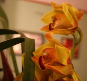 Pretty Blooms ~ LifeOfJoy.me