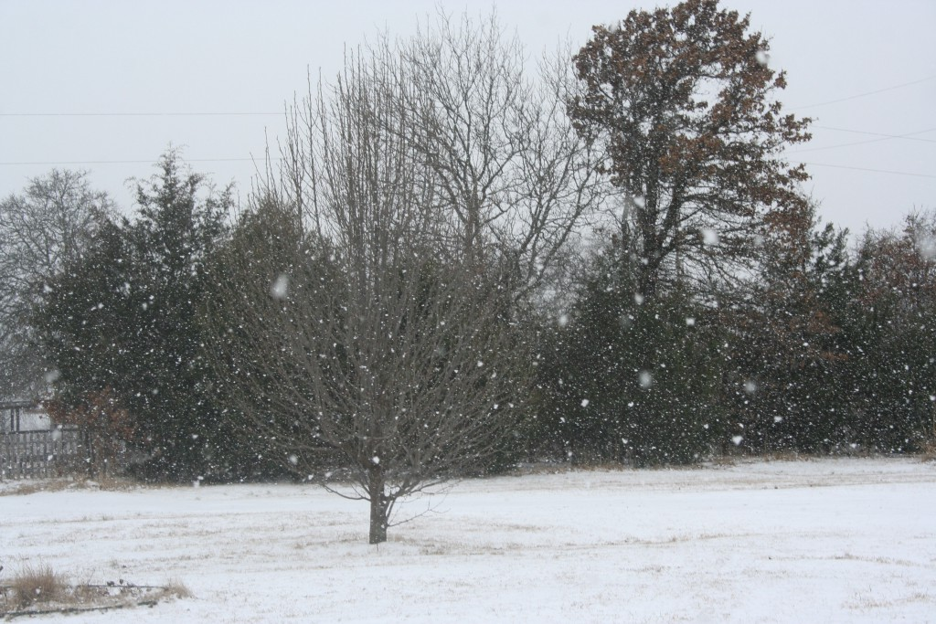 Snowing ~ LifeofJoy.me