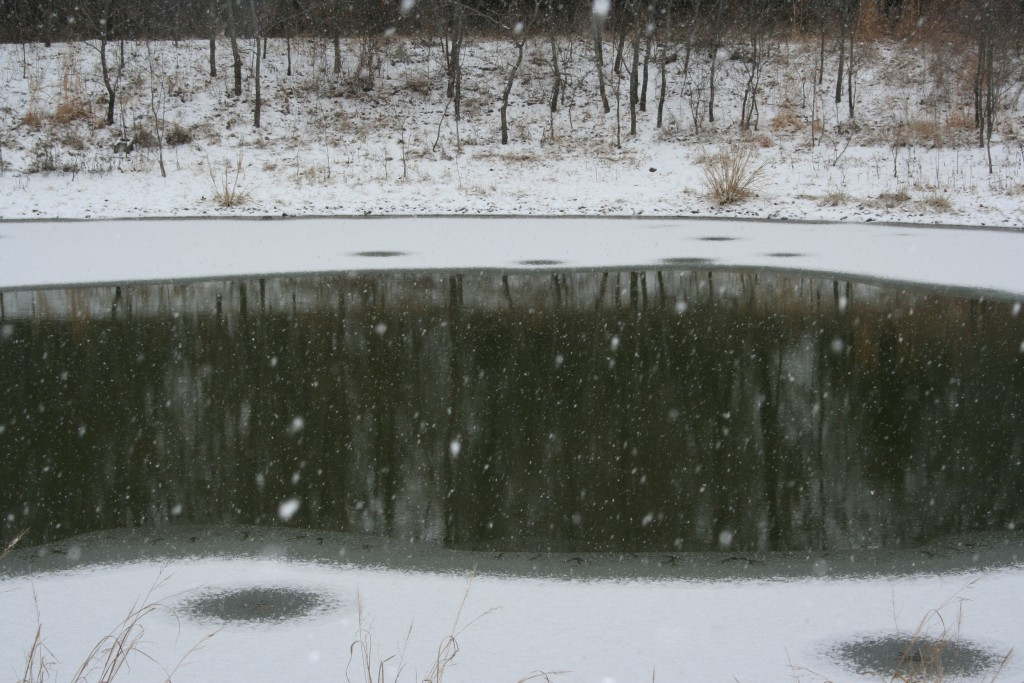 Snow on Pond ~ LifeofJoy.md