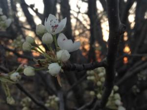 Springtime ~ LifeofJoy.me