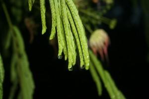 June Rain ~ Lifeofjoy.me