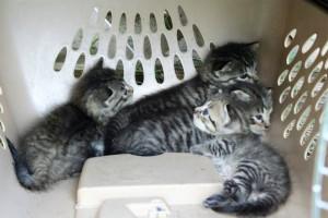 Kittens ~ Lifeofjoy.me