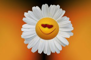 Individual Happiness ~ Lifeofjoy.me