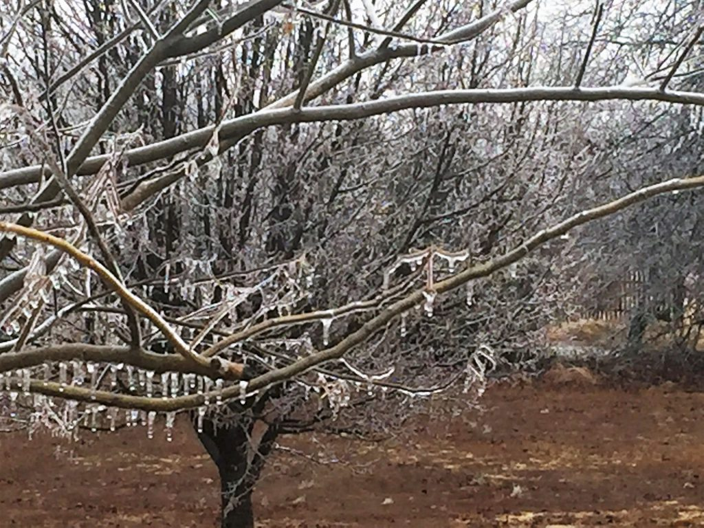 Iced Branches ~ Lifeofjoy.me