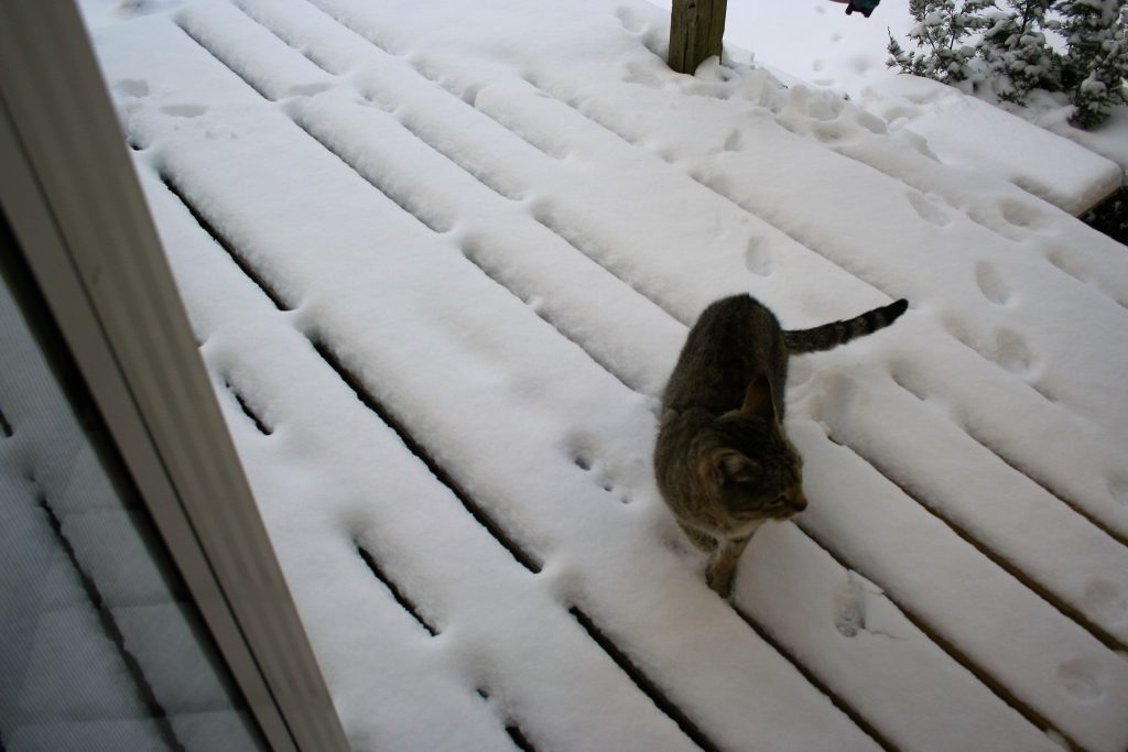 Sandy on the porch in the snow ~ Lifeofjoy.me