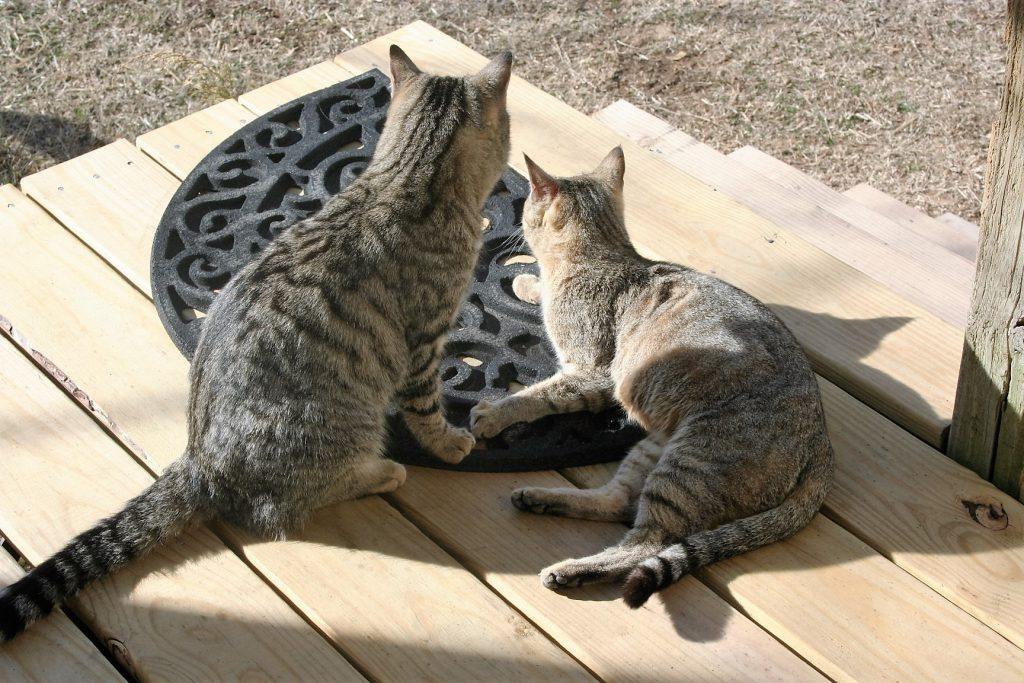 Cats ~ Lifeofjoy.me