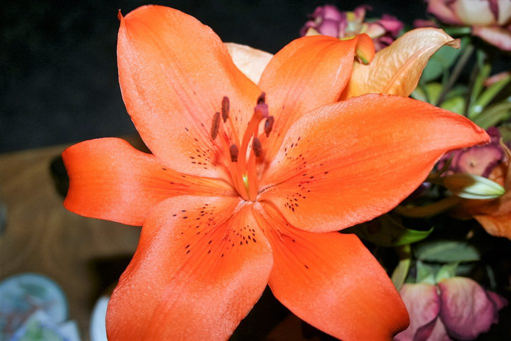 Gorgeous Lily ~ Lifeofjoy.me