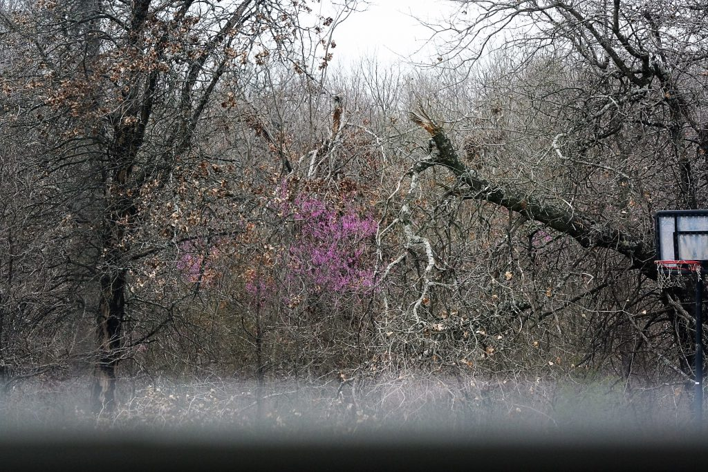 Redbud in the distance ~ Lifeofjoy.me