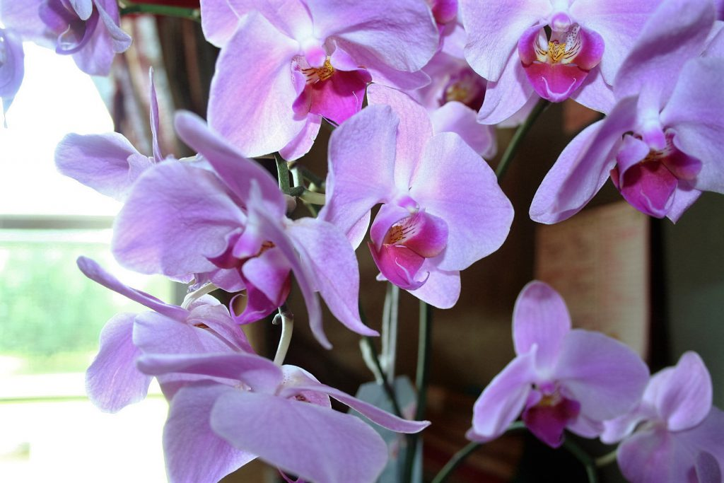Orchids ~ Lifeofjoy.me