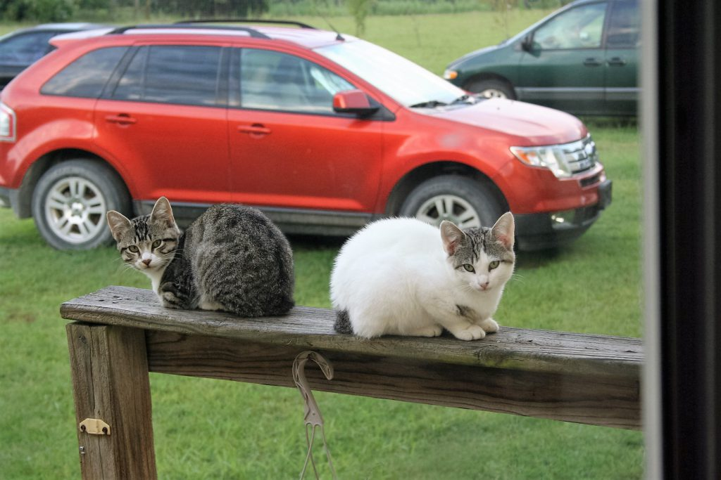 Kittens on a Rail ~ Lifeofjoy.me