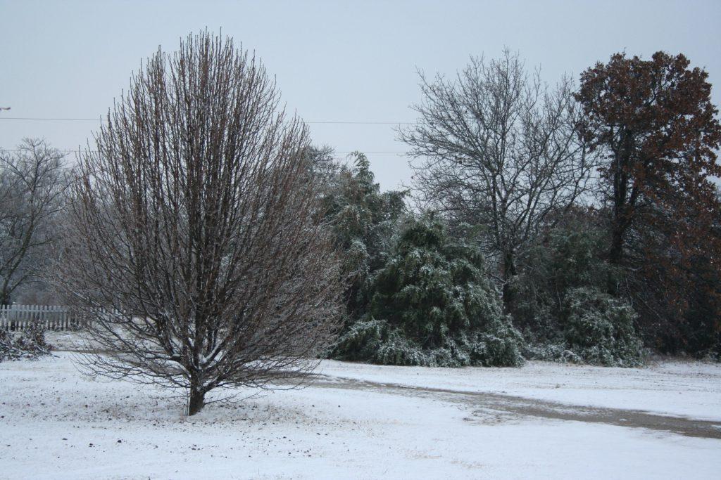 12/17 Snow ~ Lifeofjoy.me