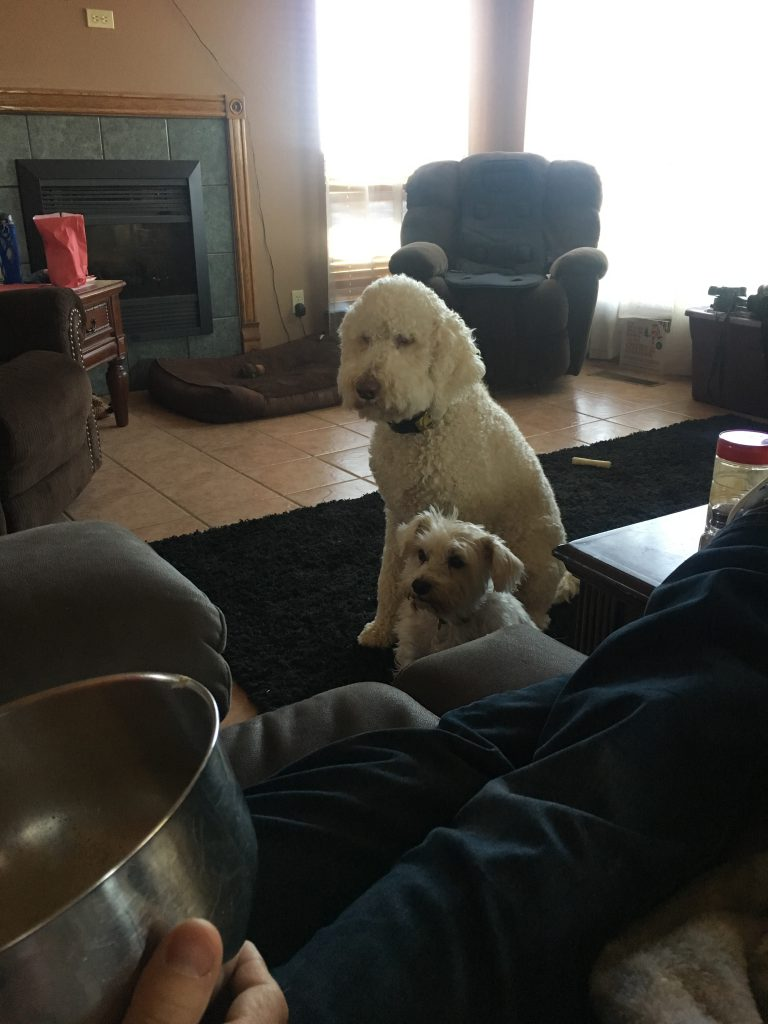 Dogs Staring Down Popcorn Eater ~ Lifeofjoy.me