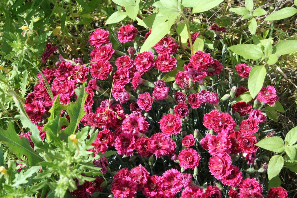 Spring Flowers ~ Lifeofjoy.me