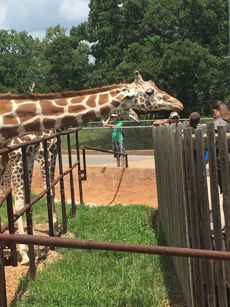 Momma Giraffe ~ Lifeofjoy.me