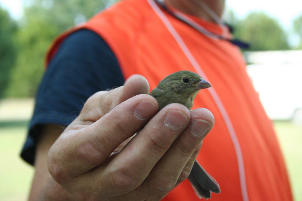 Bird in hand ~ Lifeofjoy.me