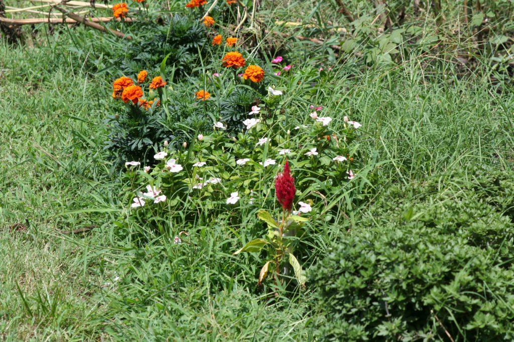 Overgrown Garden ~ Lifeofjoy.me