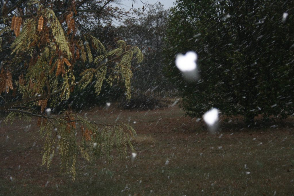Big snow flakes in Nov ~ Lifeofjoy.me