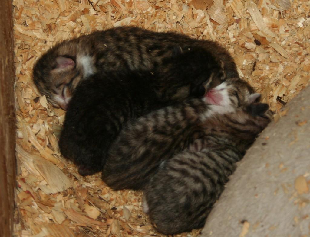 Kittens Again ~ LifeOfJoy.me