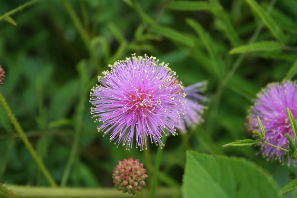 Gorgeous Flower ~ LifeofJoy.me