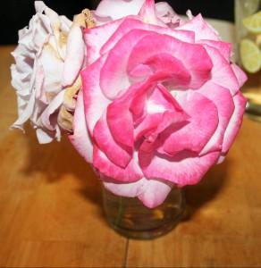 My Roses ~ Lifeofjoy.me