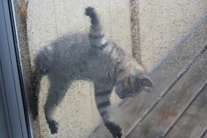 Mocha Hanging on Screen Door ~ Lifeofjoy.me