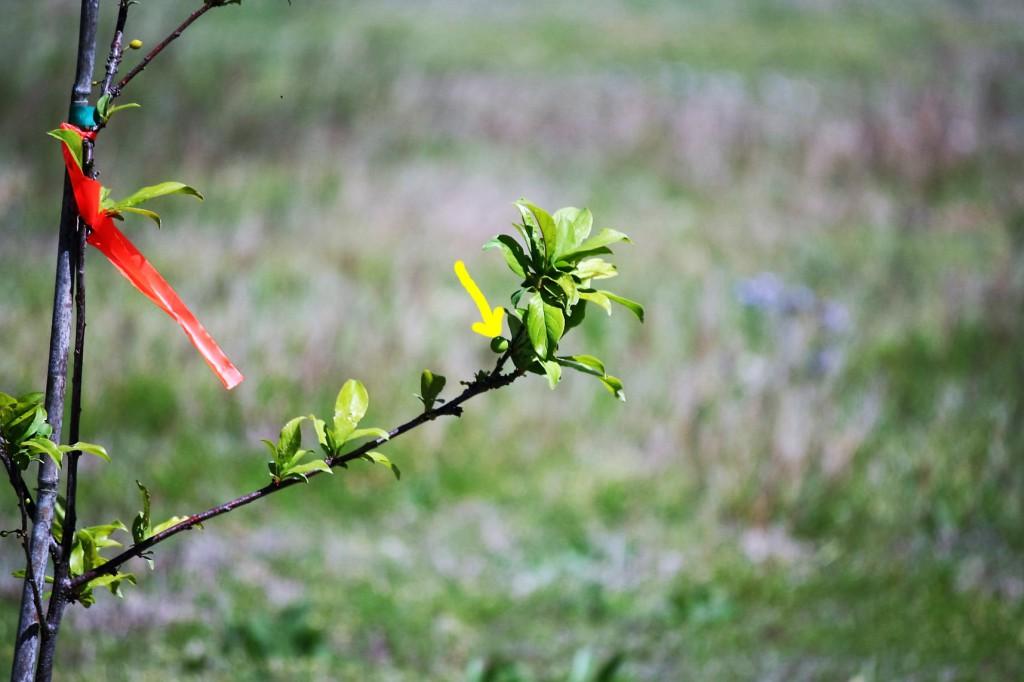 Fruit Trees ~ Lifeofjoy.me
