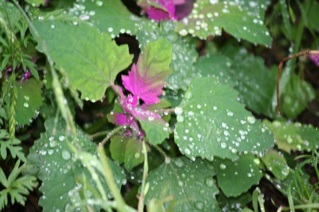 Fruit Update and Wildflowers ~ Lifeofjoy.me