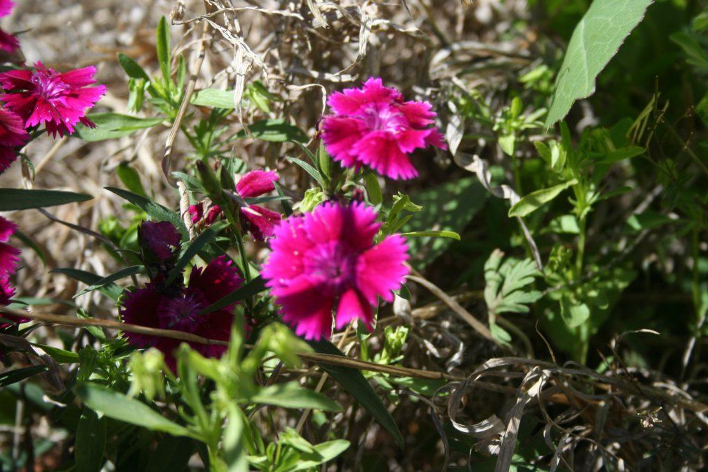 REturning flowers ~ Lifeofjoy.me