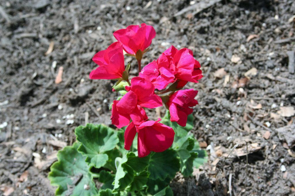 Flowers ~ Lifeofjoy.me