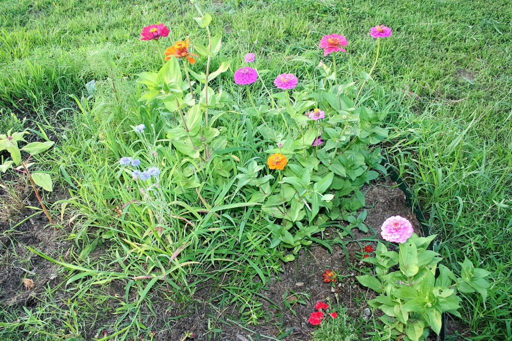 Flowers from seeds ~ Lifeofjoy.me
