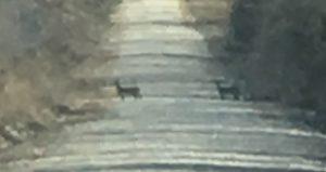 Close-up Deer In Road ~ Lifeojfoy.me