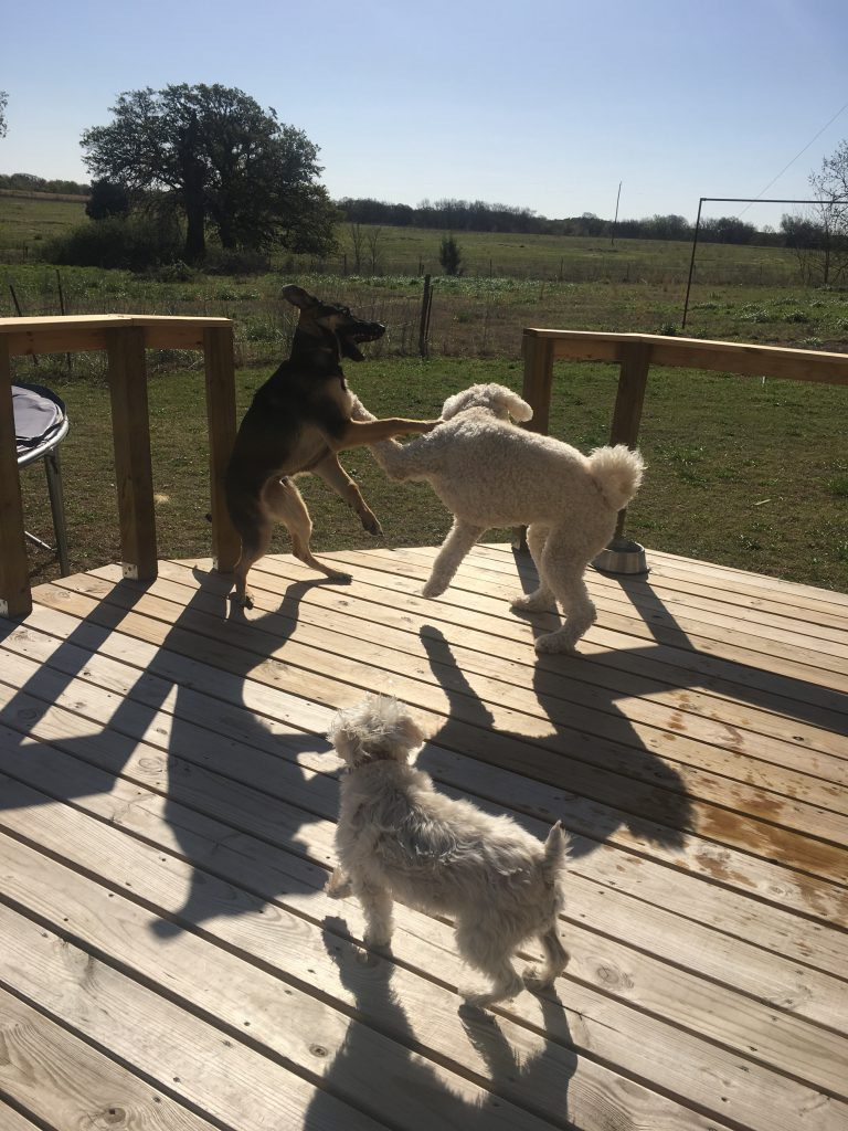 Dog Fun ~ lifeofjoy.me