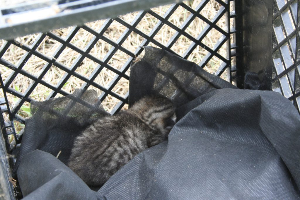 Lonely Kitten ~ Lifeofjoy.me