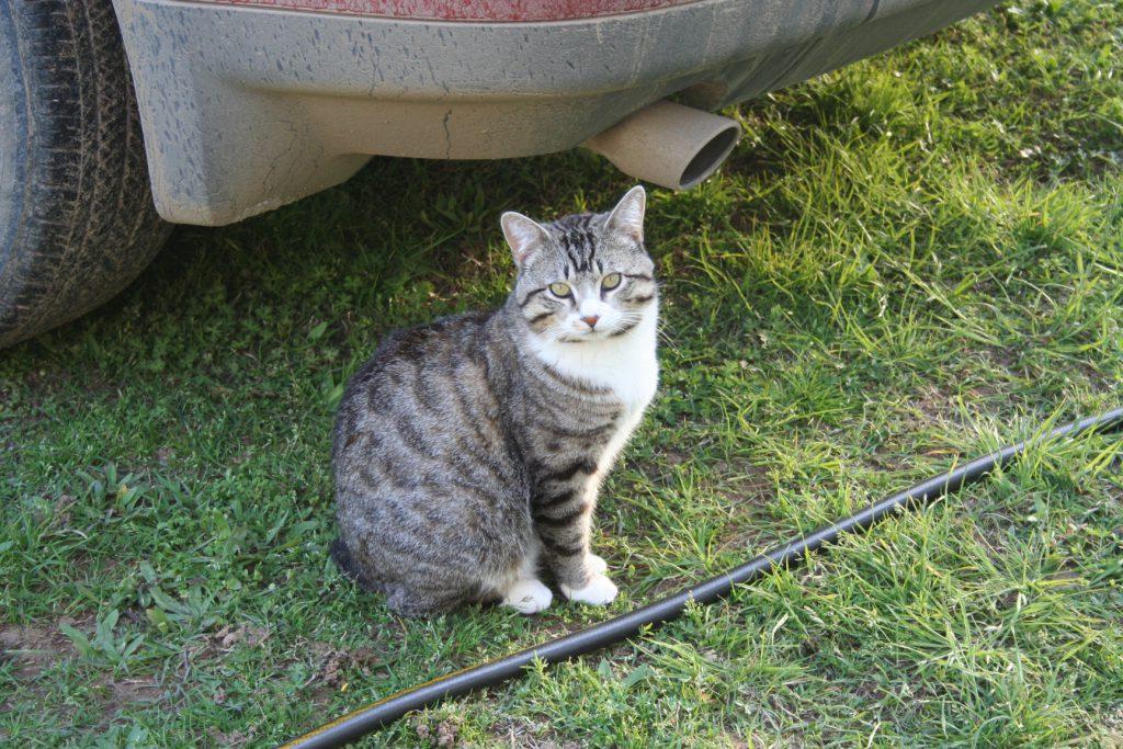 Handsome Cat ~ Lifeofjoy.me