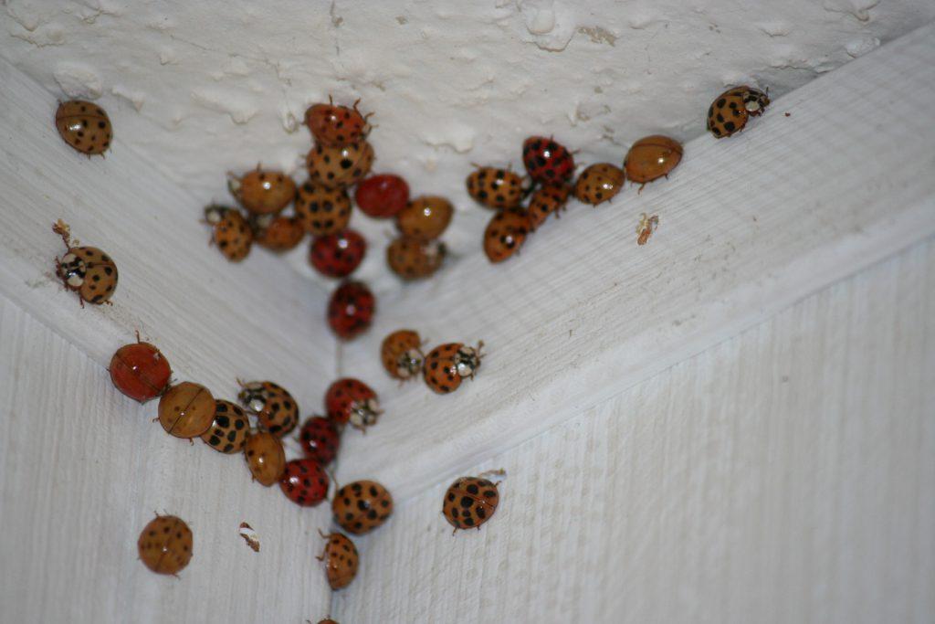 More beetles inside ~ Lifeofjoy.me