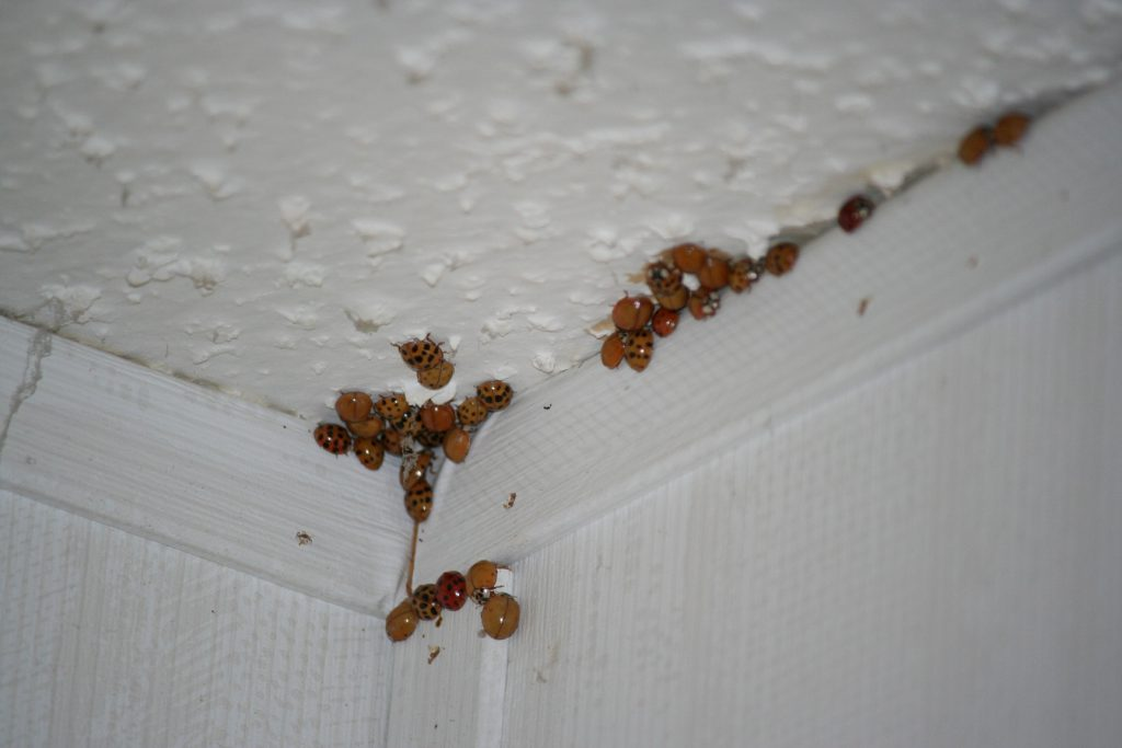 Beetle time again ~ Lifeofjoy.me