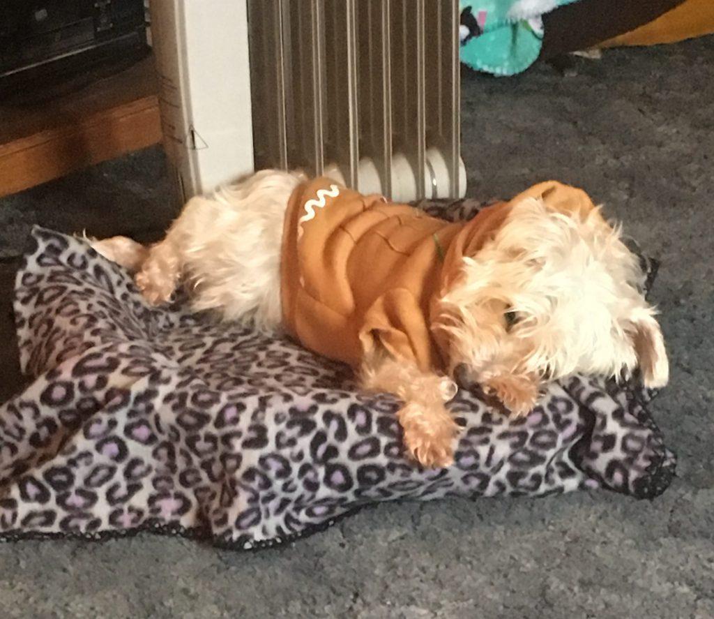 Dog sleeping ~ Lifeofjoy.me
