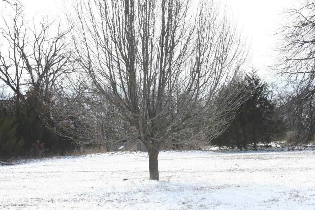 March 2019 Snow ~ Lifeofjoy.me