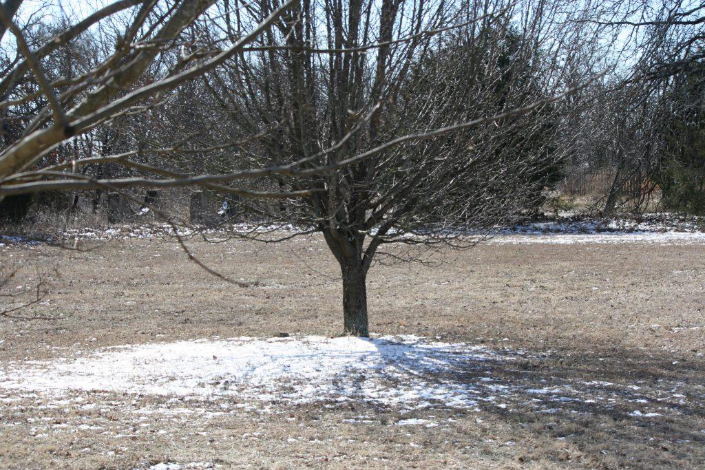 Snow quickly departs ~ Lifeofjoy.me