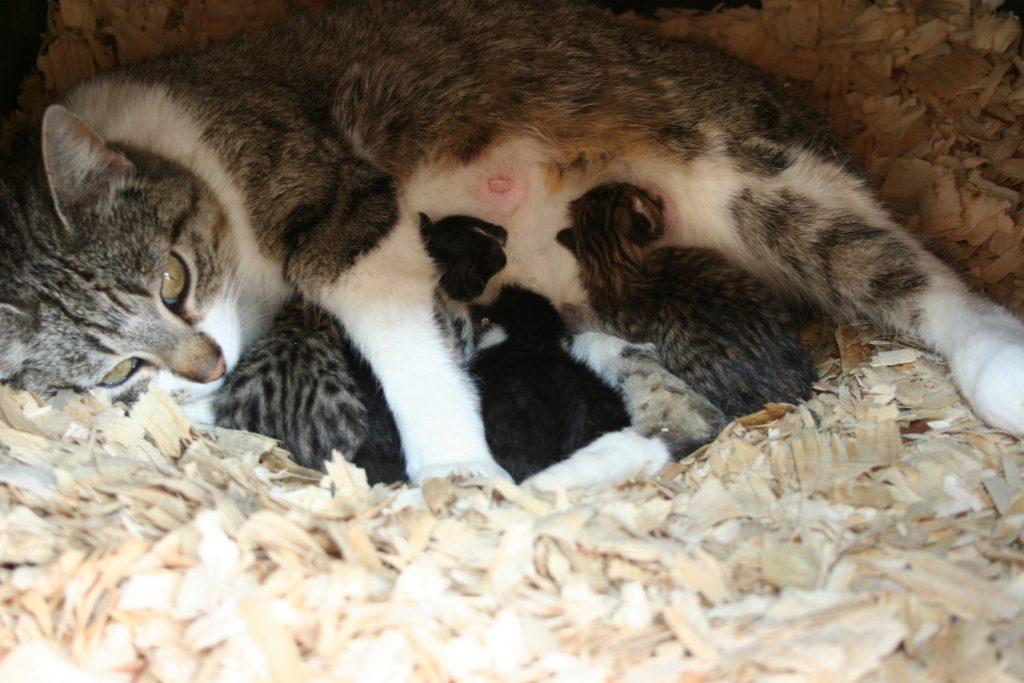 New Kittens ~ Lifeofjoy.me